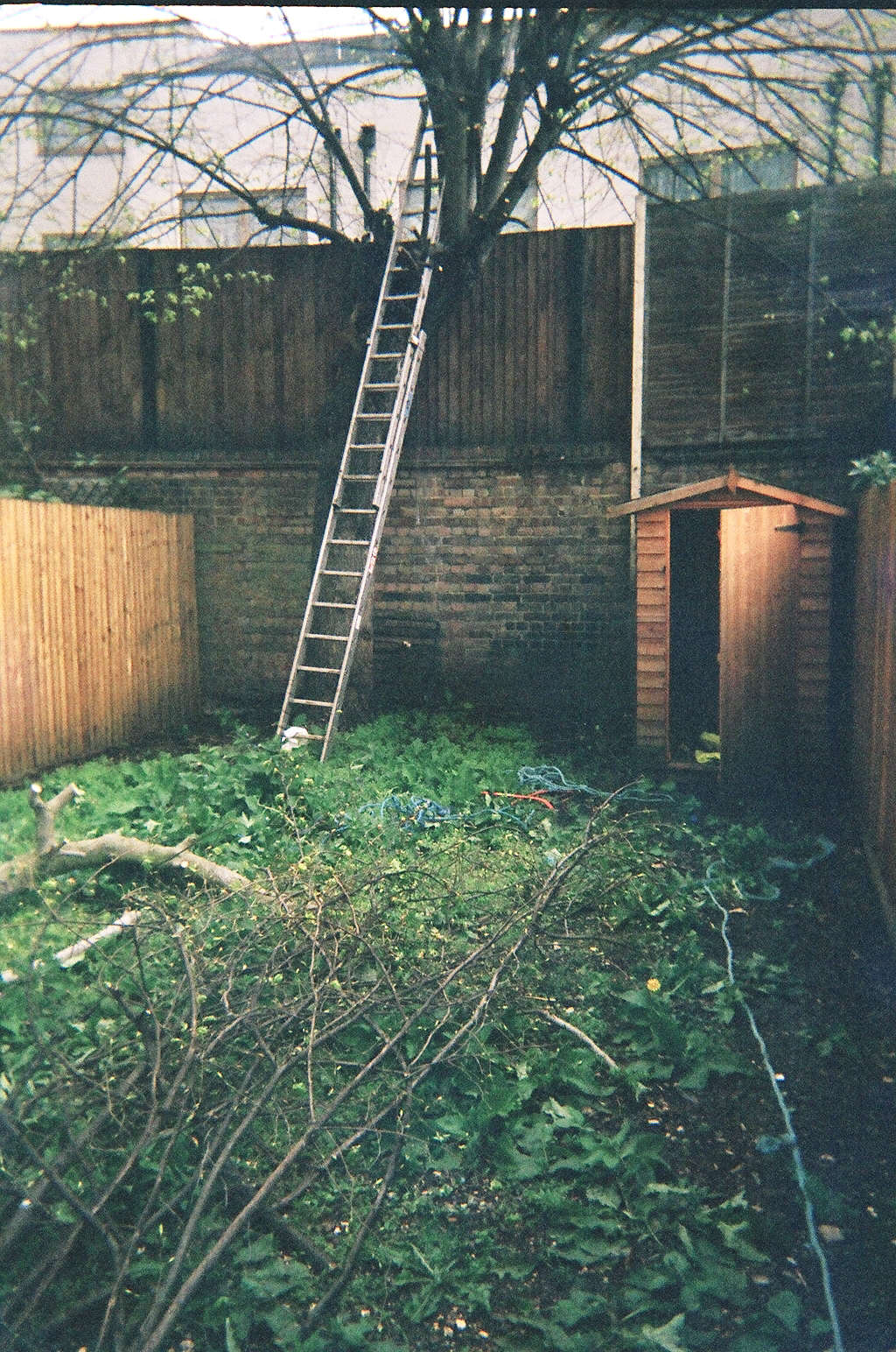 Professional ree work to increase daylight in the rear garden